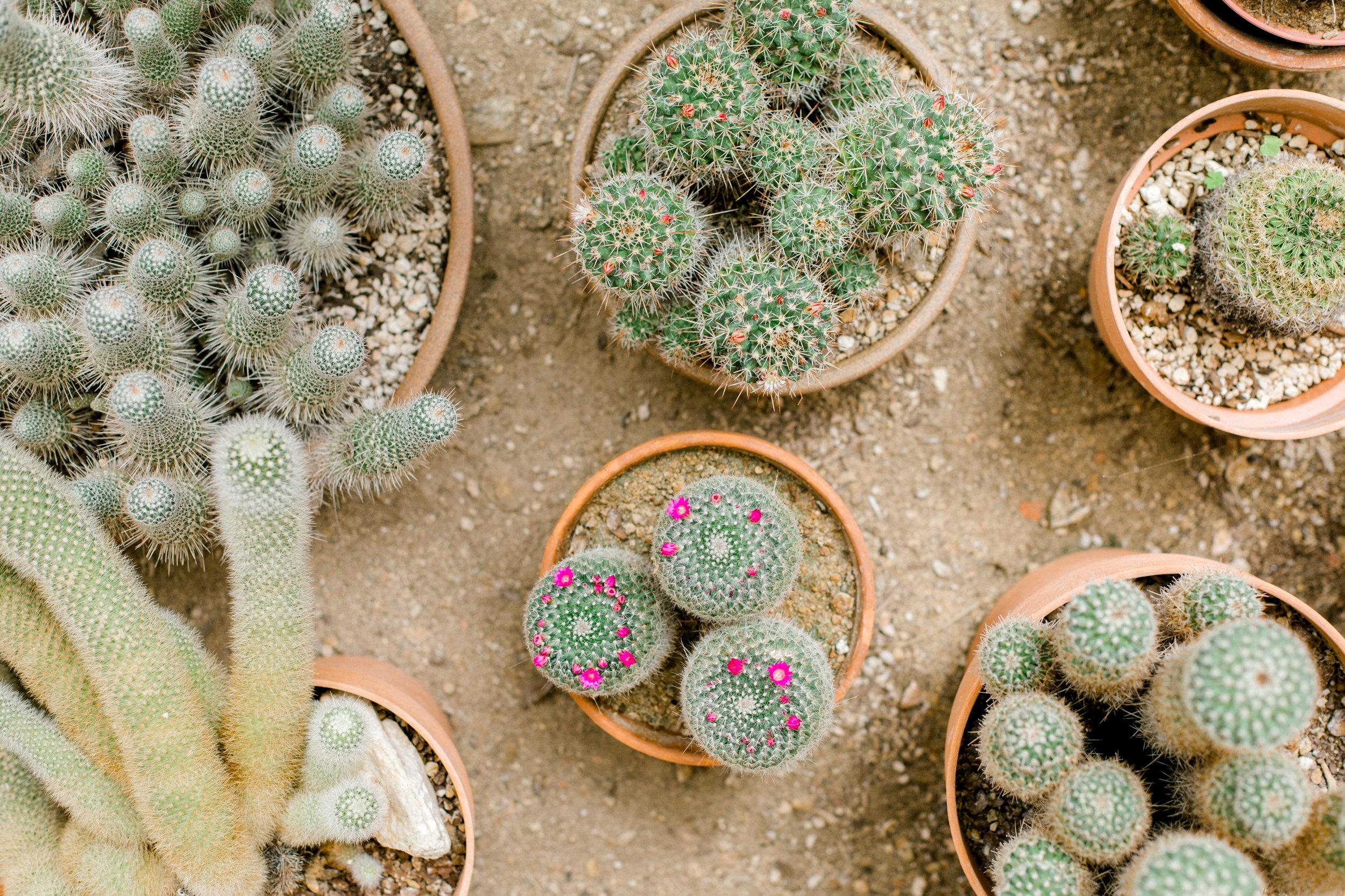 Jessica Sgubin Photography Atlanta Portrait photographer los angeles la salvation mountain greenhouse cactus garden moorten botanical garden cabazon dinosaurs santa monica joshua tree-50.jpg