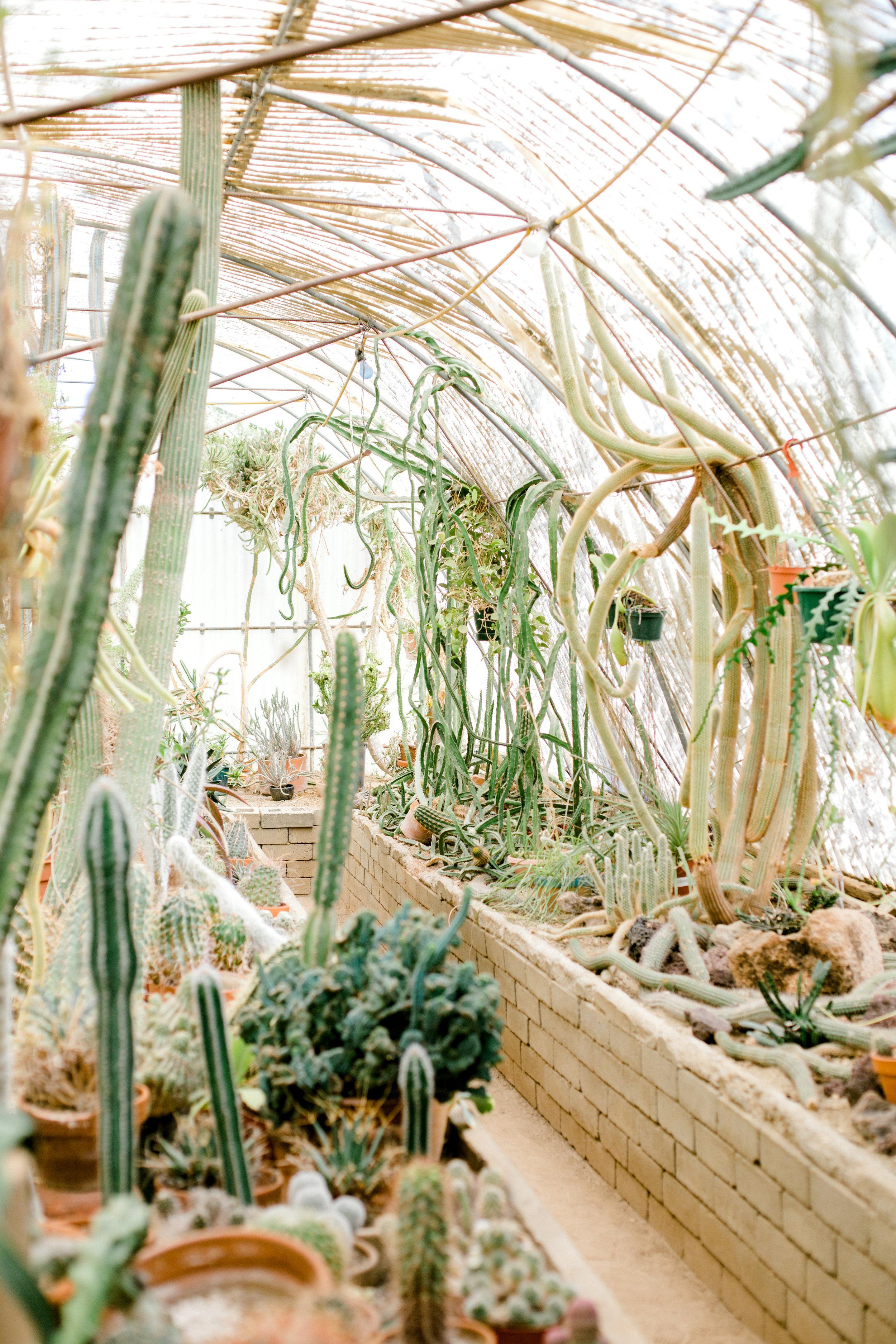 Jessica Sgubin Photography Atlanta Portrait photographer los angeles la salvation mountain greenhouse cactus garden moorten botanical garden cabazon dinosaurs santa monica joshua tree-56.jpg