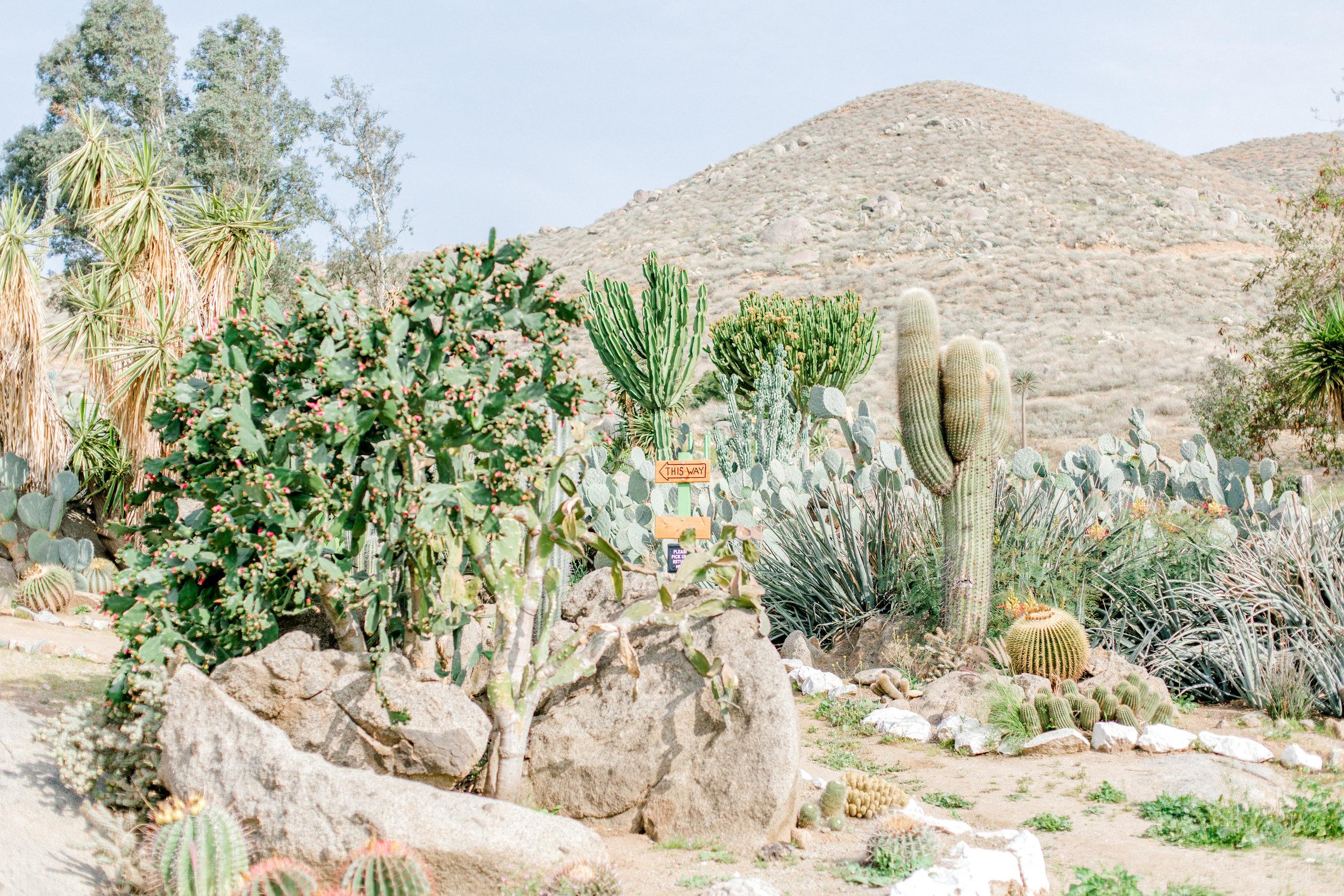 Jessica Sgubin Photography Atlanta Portrait photographer los angeles la salvation mountain greenhouse cactus garden moorten botanical garden cabazon dinosaurs santa monica joshua tree-1-3.jpg