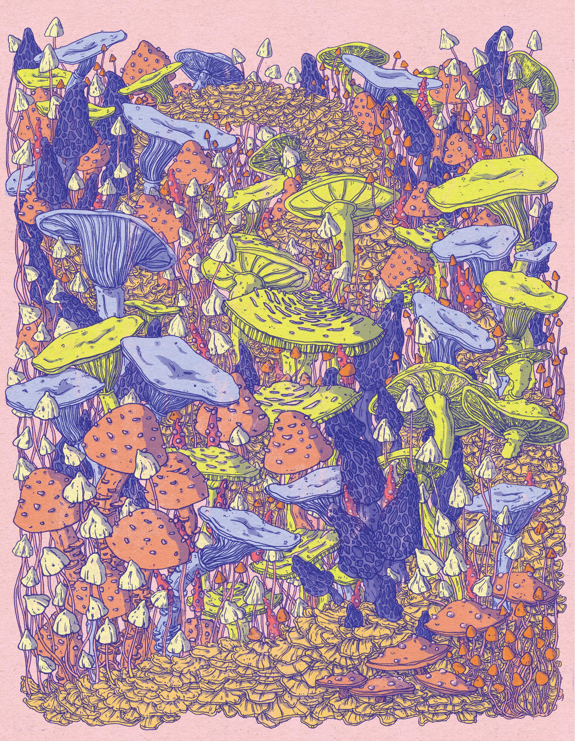Mushrooms-byMeredithMiotke.jpg