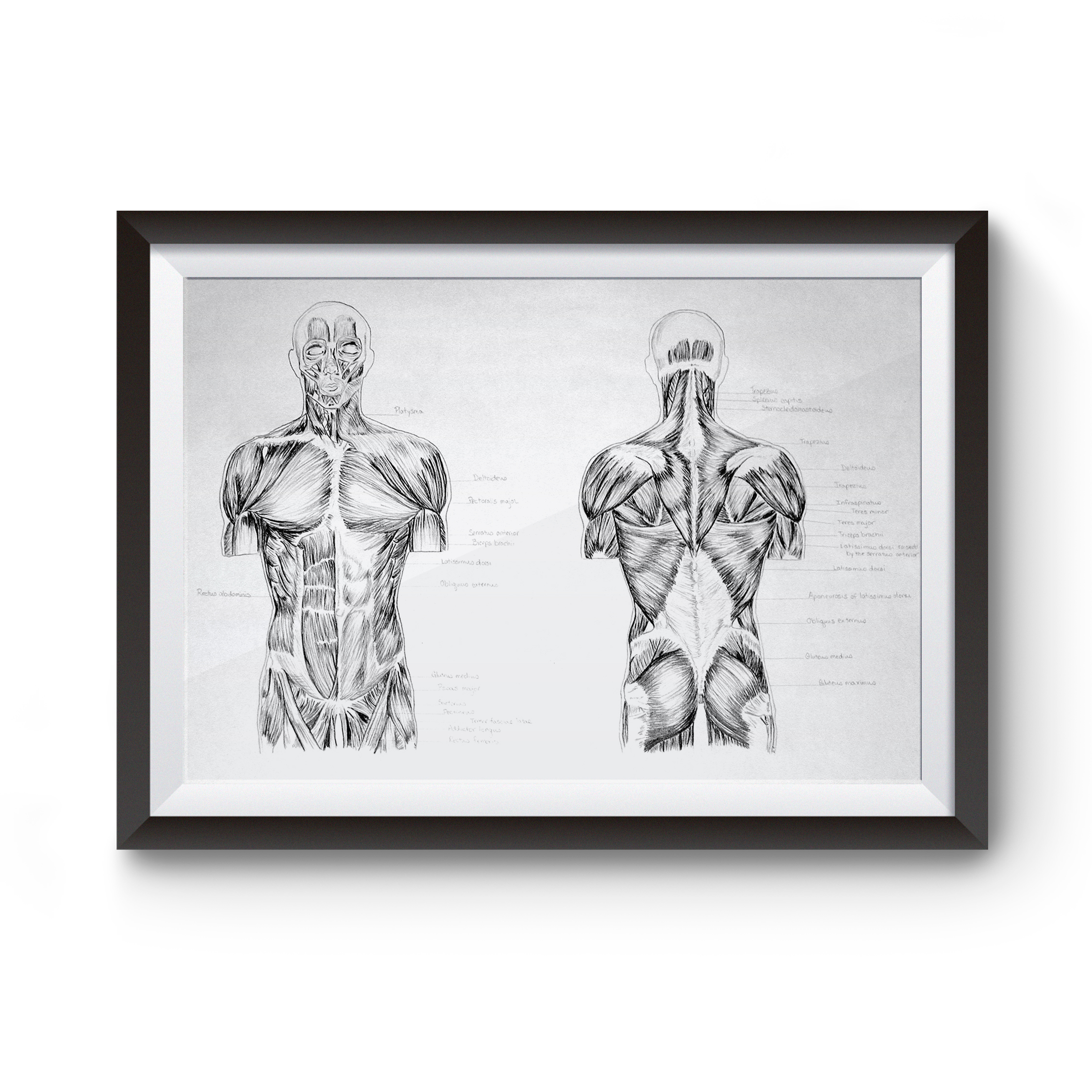 anatomy_artwork.jpg