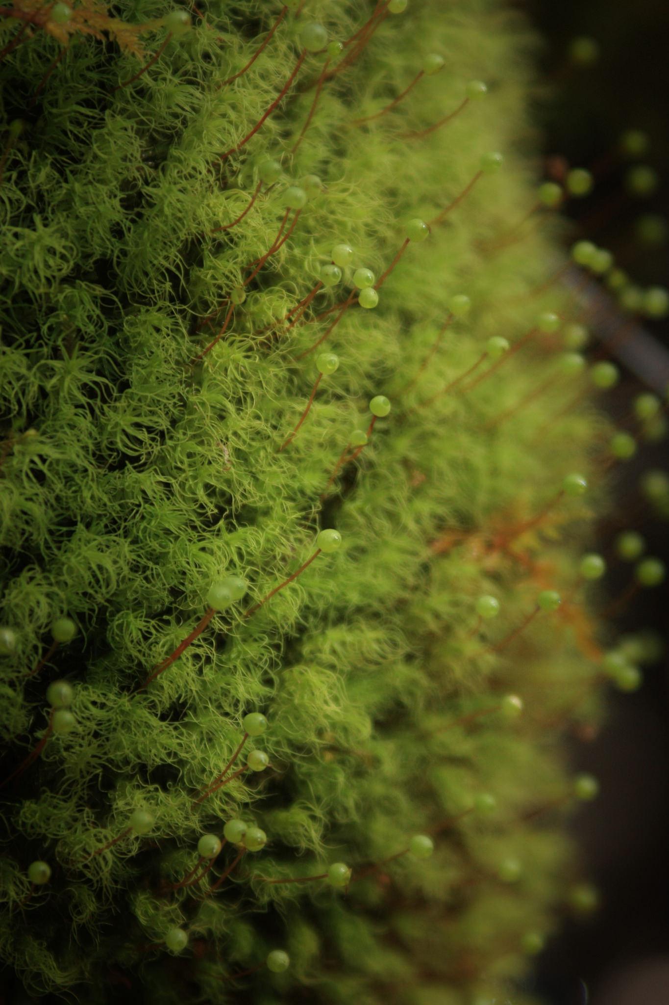 Moss by Kai