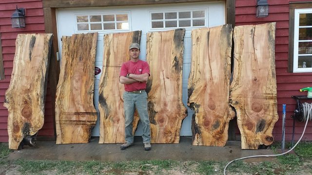 timberking3.jpeg