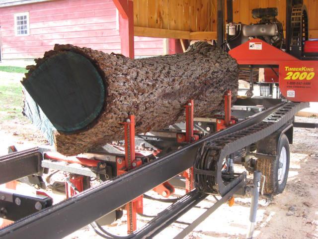 timberking6.jpg