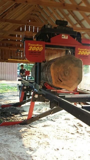 timberking7.jpeg