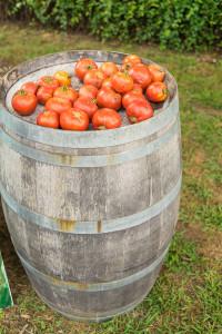 160820 Tomato Fest-14