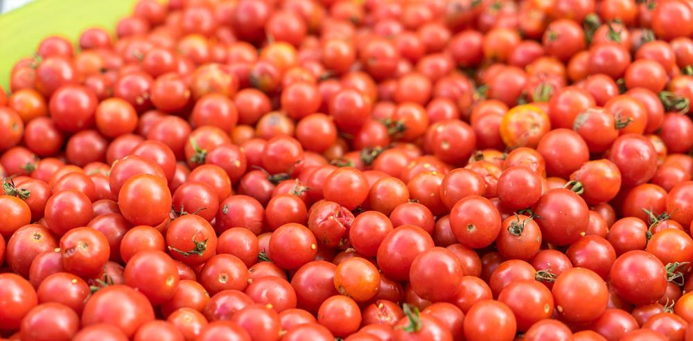 160820 Tomato Fest-16