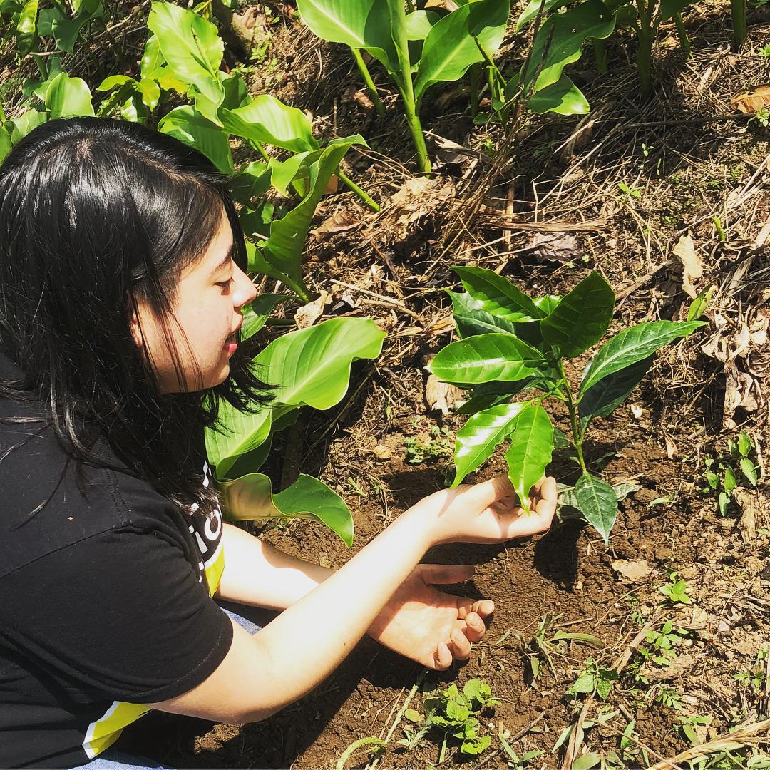 Mayra plant coffee in Chiapas.jpg