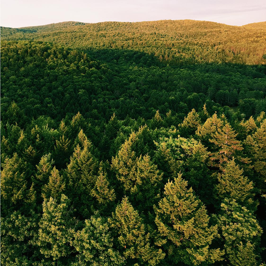 hot_air_balloon_aerial_view_trees.jpg