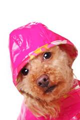 pet rain.jpg