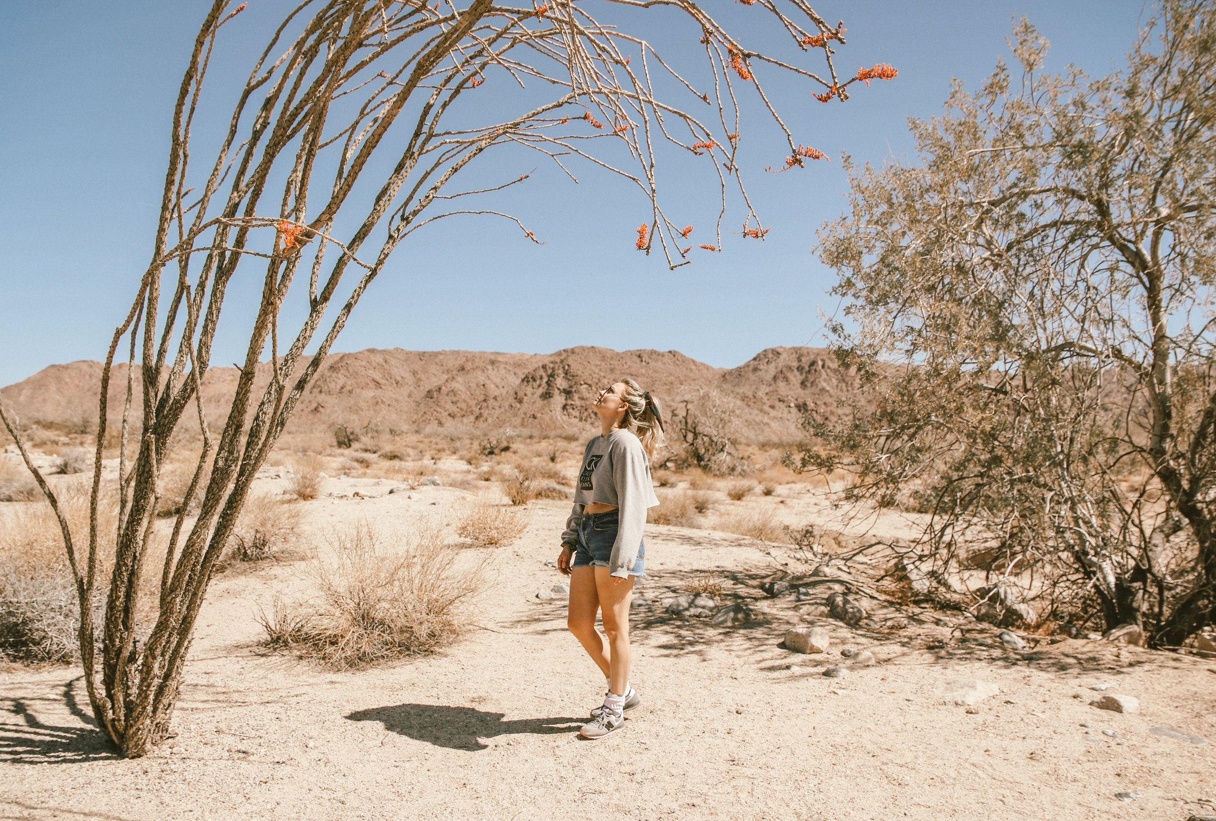 JOSHUA TREE - stop number one...