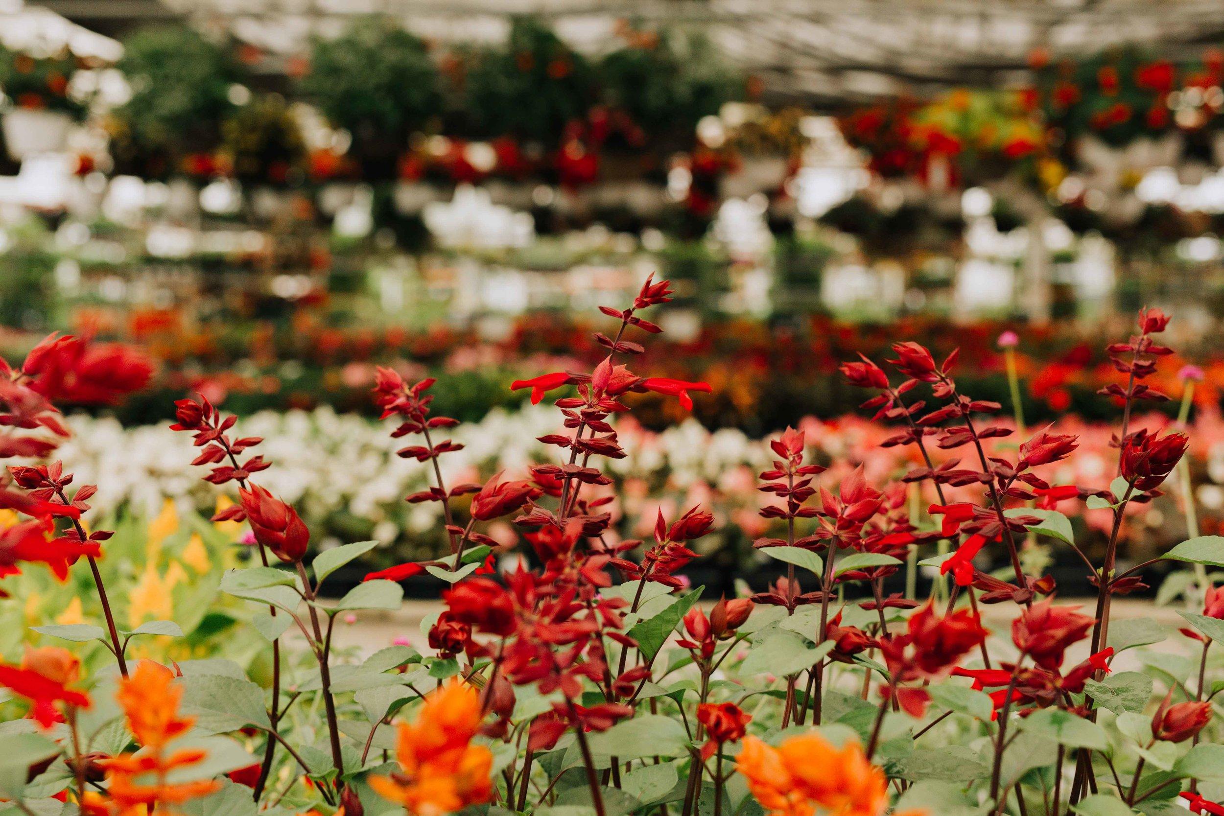 Merrifield-garden-greenhouse-indoor-Jacqueline-Waters-Photography-Red-dress-family- (285).jpg