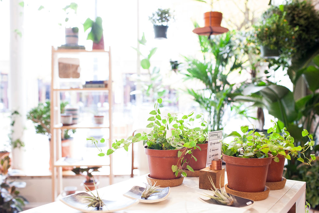 hello! - Foyer Shop is dedicated to bringing plants, flowers, and other beautiful things to apartments, offices, lobbies, rooftops, studios, vestibules, treehouses, clubhouses, powder rooms, coffee shops, and anywhere else they might be needed or appreciated. The shop is brother-sister project based on the family philosophy that small, affordable changes can transform your space. Along with user-friendly plants, we sell tools for daily life, framed prints and drawings, stationery, ready-made bouquets, and fresh flowers by the stem. Everything in the shop is designed to make a seamless transition from our space to yours, so you can use it and enjoy it.