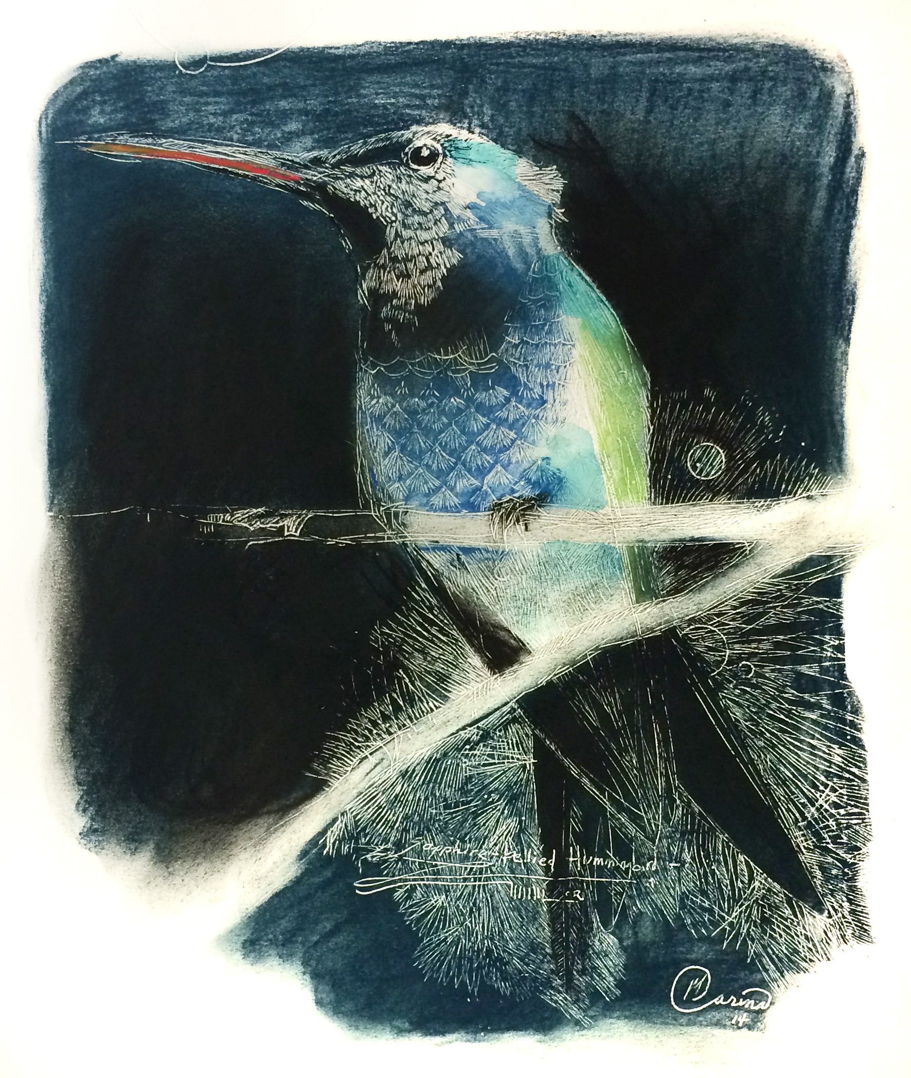 Sapphire-breasted hummingbird