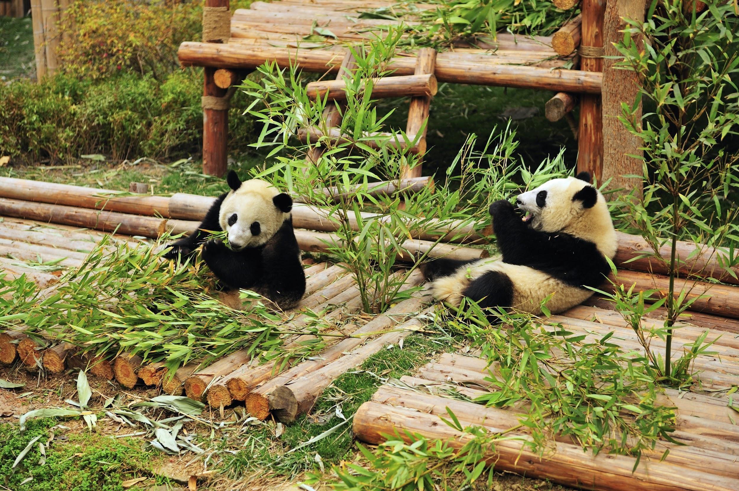 CHINA 5.jpg