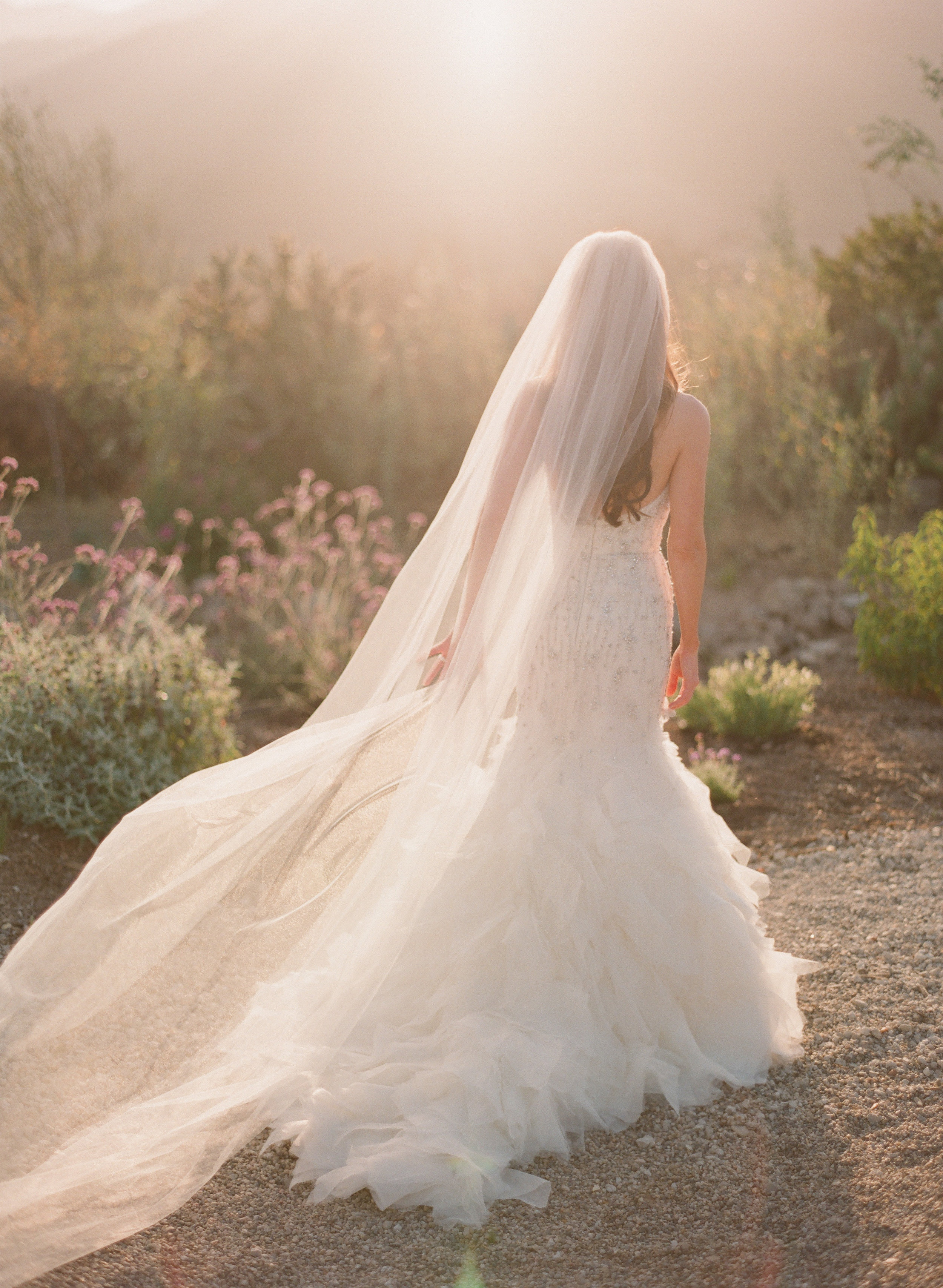 weddings - ~ Select Which Wedding Gallery You'd Like to See ~