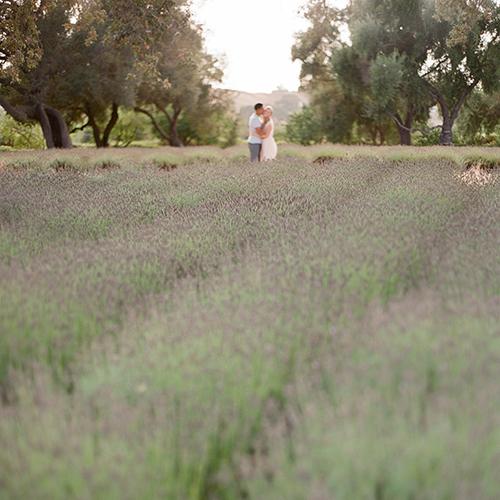 LAVENDER FARM, LOS OLIVOS