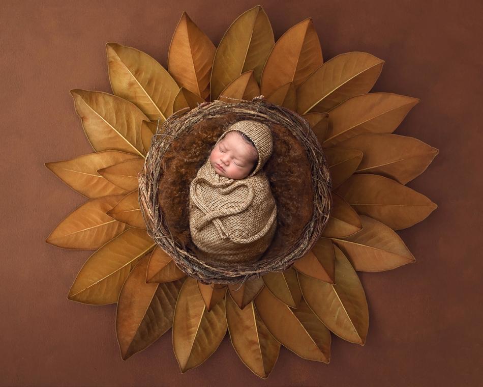 Newborn in brown composite