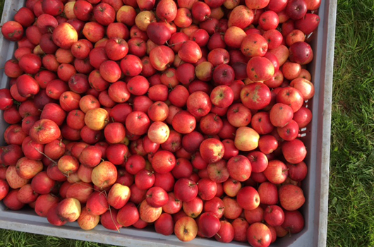 apples-e-fest.jpg