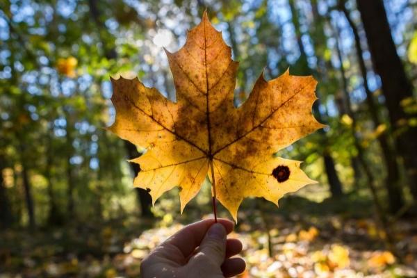 beautiful-autumn-leaf-optimised.jpg
