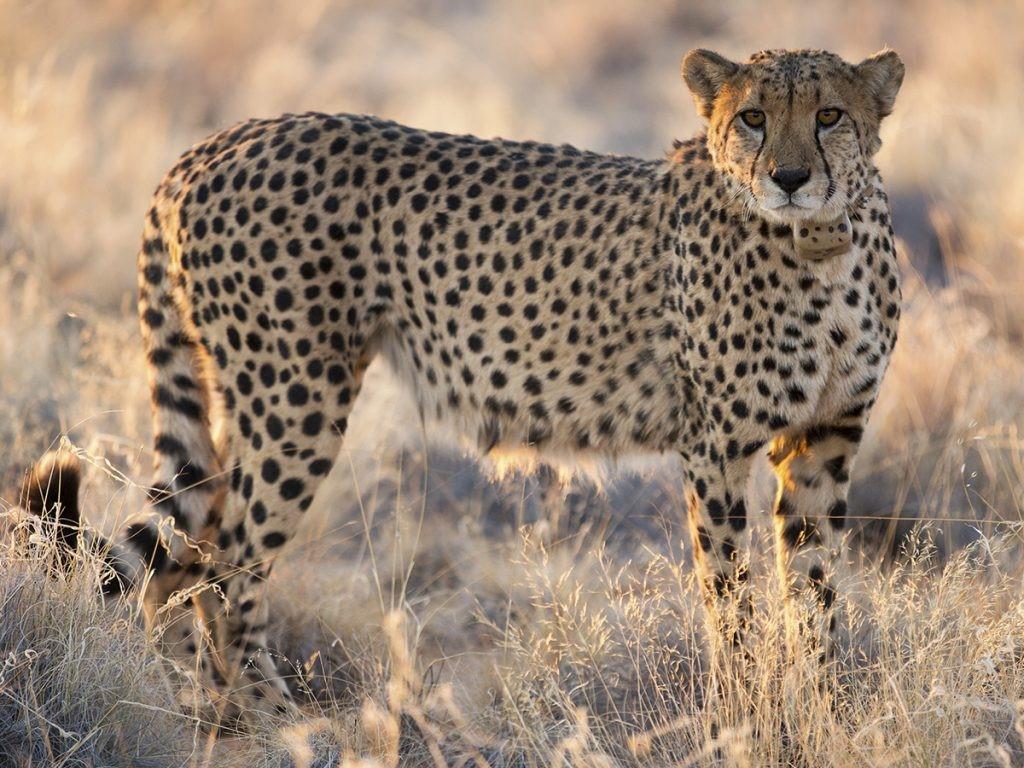Namibia III.jpg