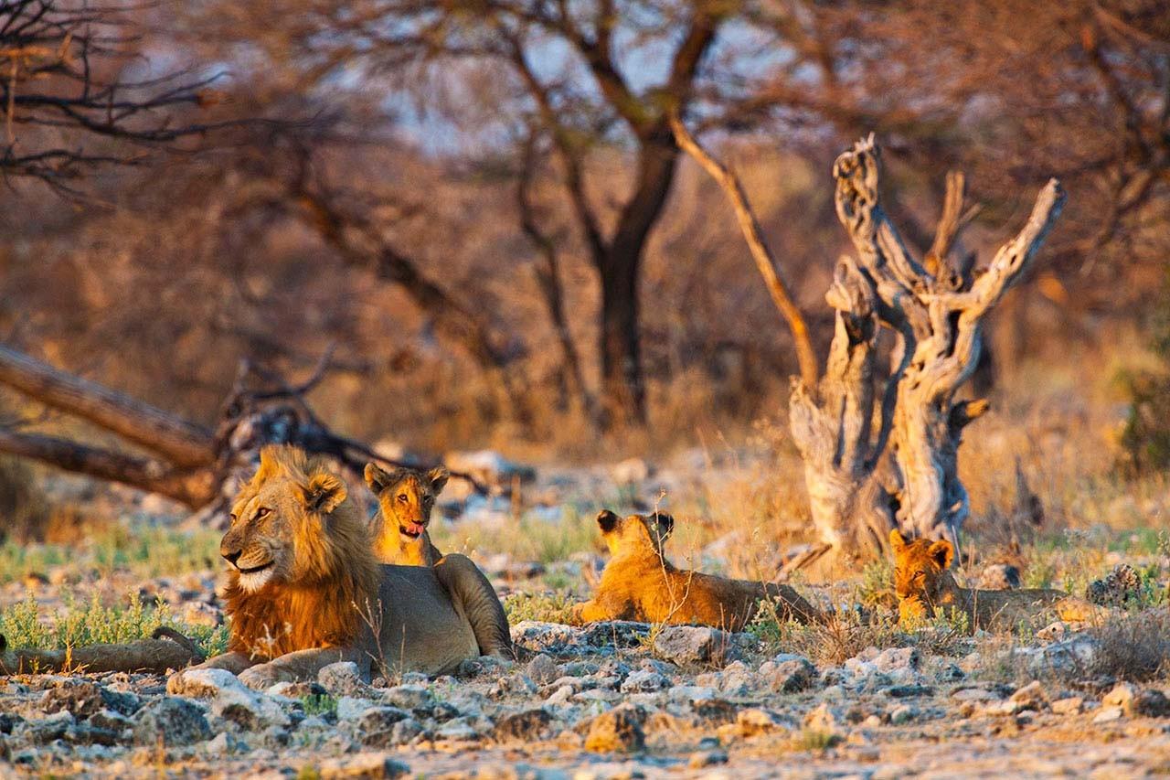 namibia V.jpg
