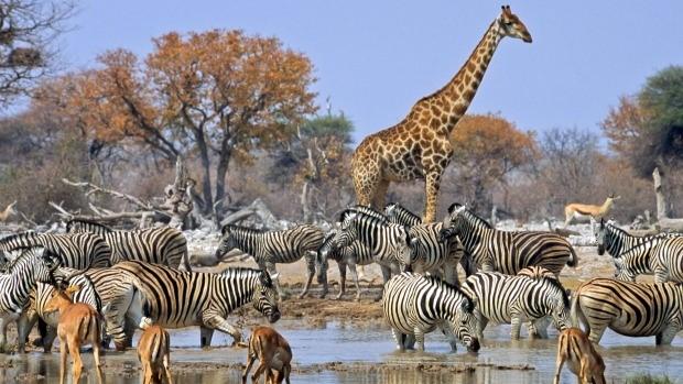 Namibia VII.jpg