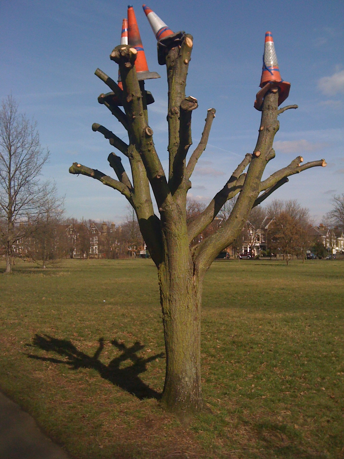 Wandsworth tree