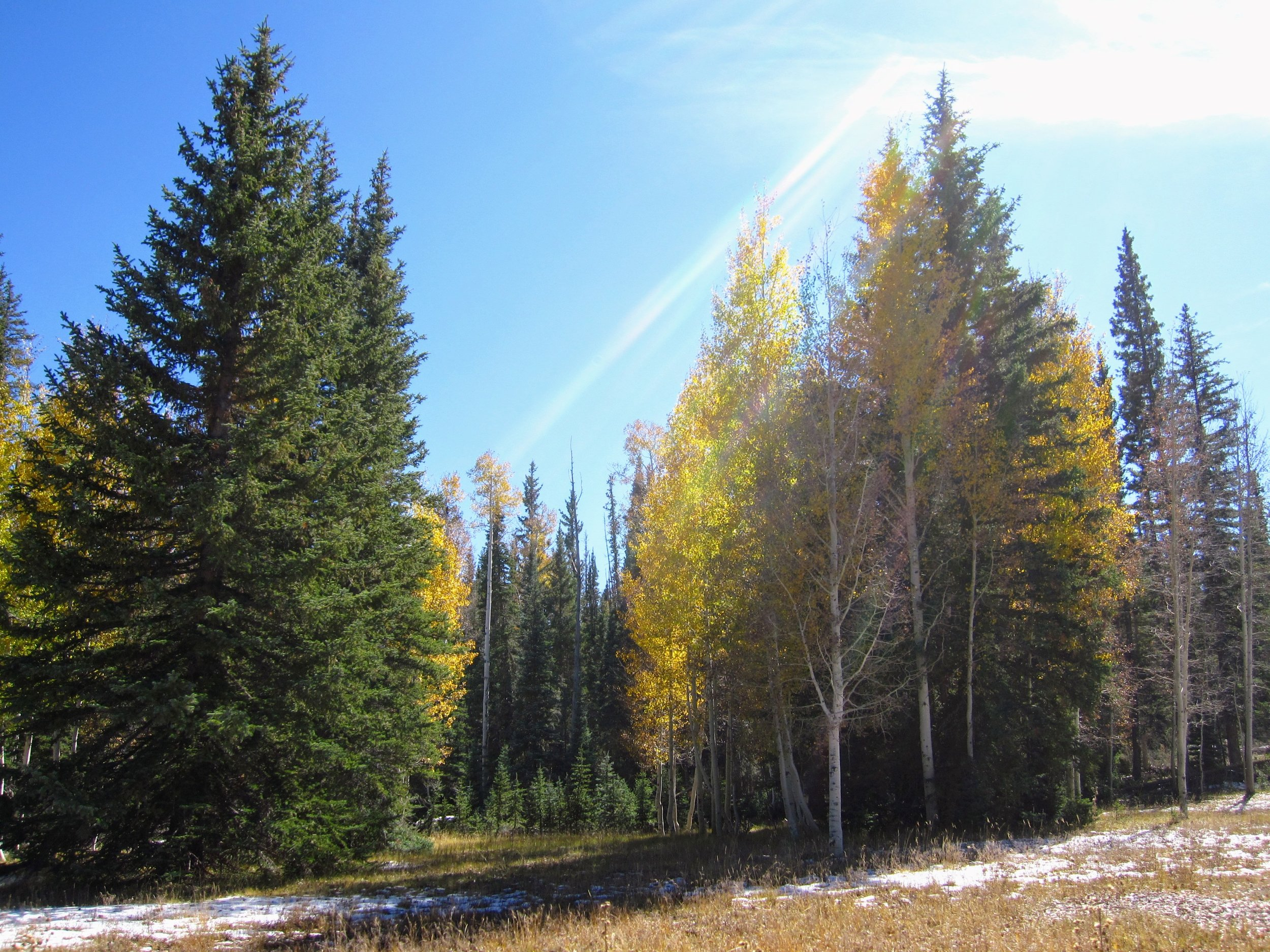 October 2011 - Yellow aspens, snow on the ground.... almost closing time for the North Rim.