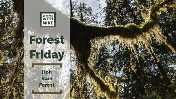 Forest Friday - 7_27_18 (1).jpg