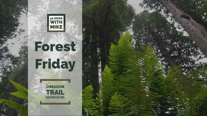 Forest Friday - 8_17_18.jpg