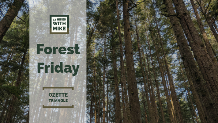 Forest Friday 8.24.18.jpg