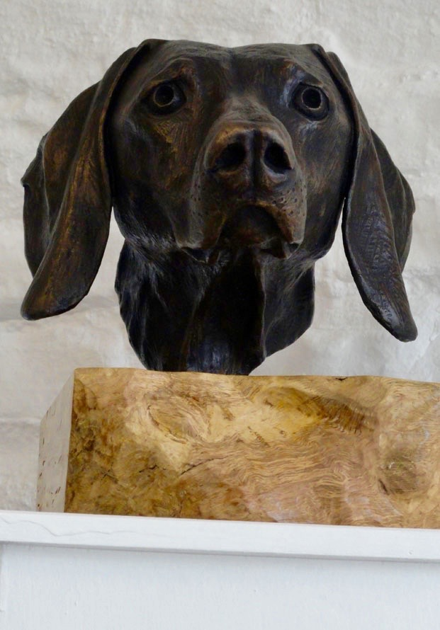 Weimaraner on Burr Oak