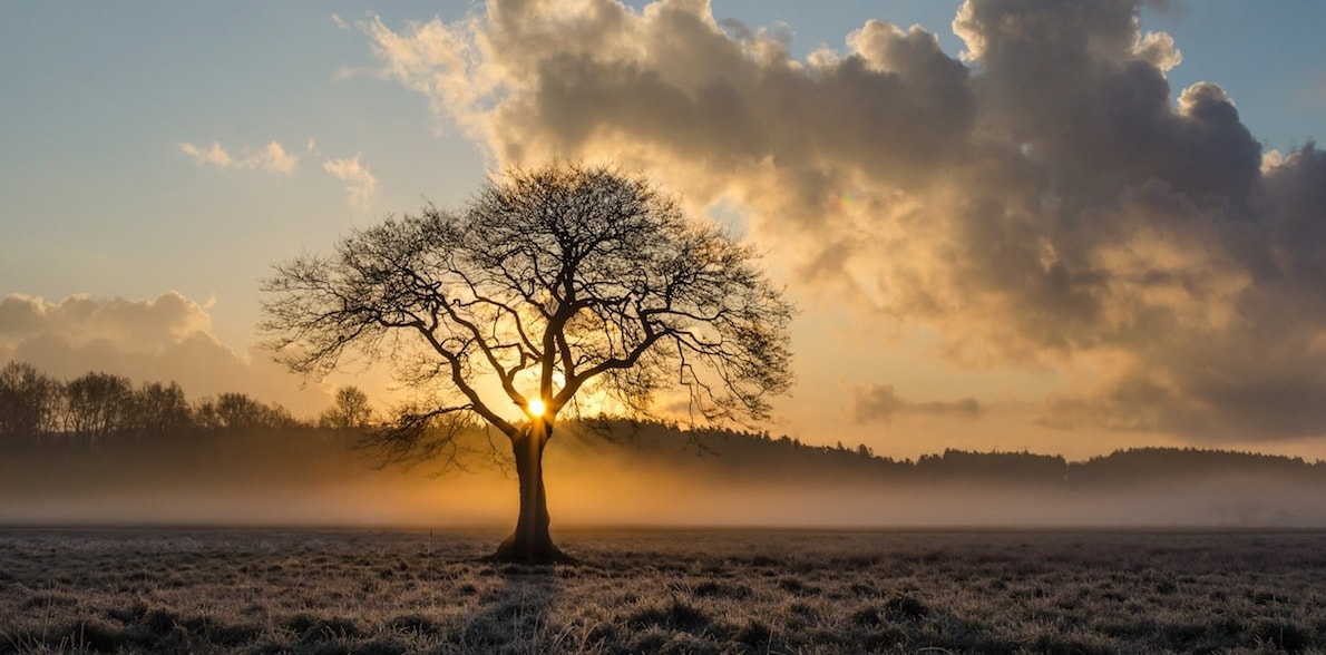 thumbnail of tree silhouetted against sunrise