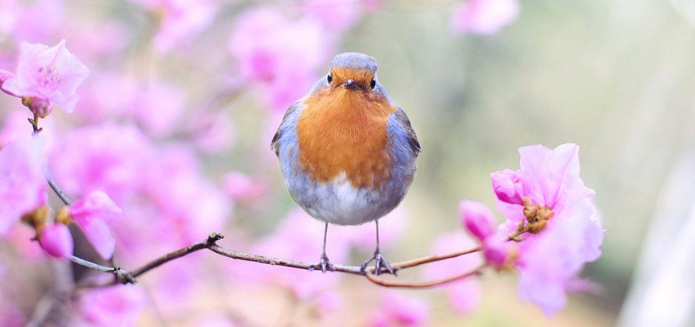 spring-bird-2295436_1280-1170x550.jpg