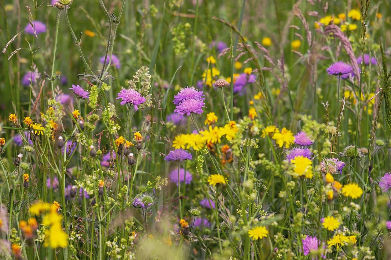 wild-flower-meadow-3386014_1280.jpg