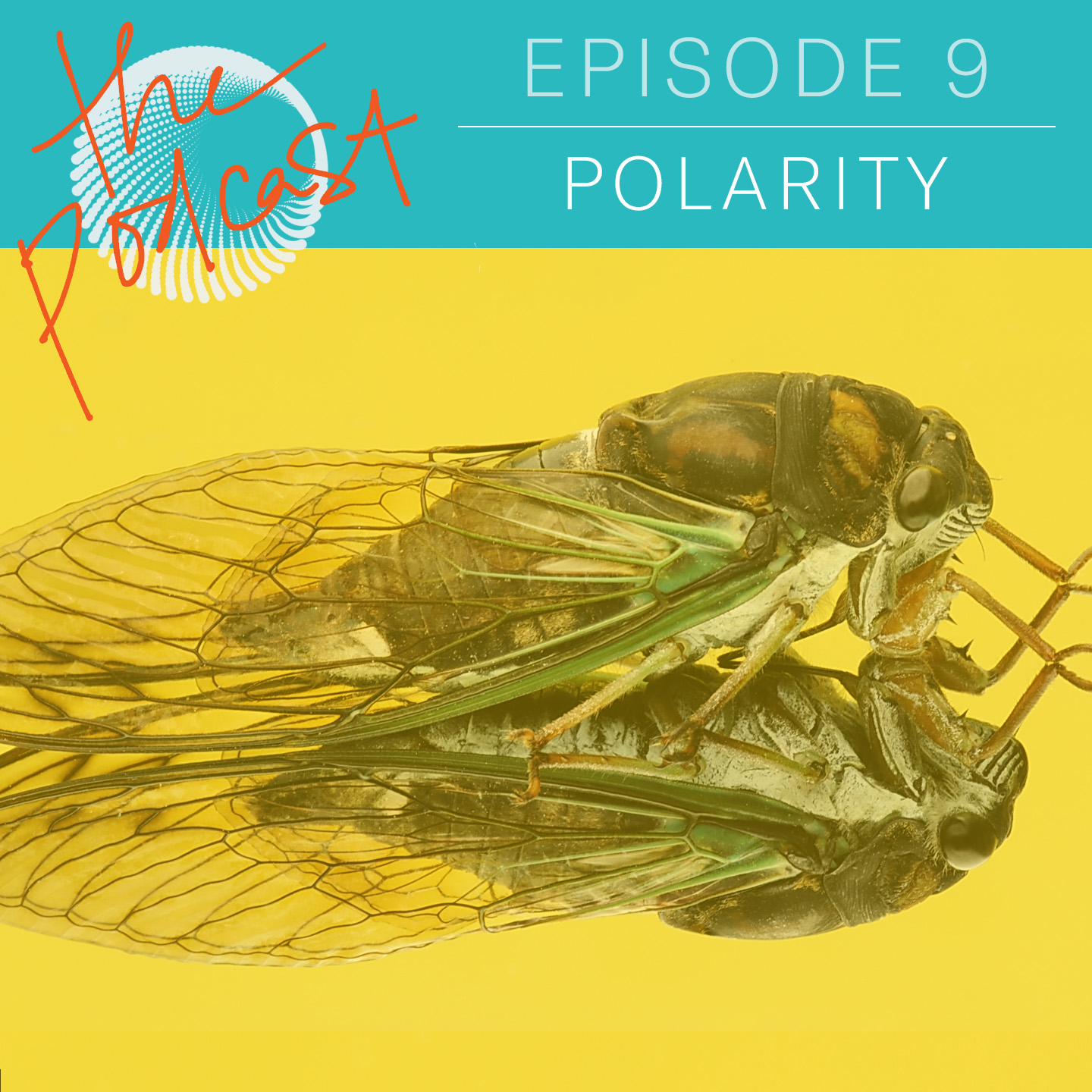 S01 EP09: POLARITY HOW TO BUILD BRIDGES FOR ACTION AND CAPACITY THROUGH LISTENING  In episode nine, Tim and Tuesday dig into the reflex to act without considering schisms at-play — and illuminate how and why we retreat from difficulty (and from each other).