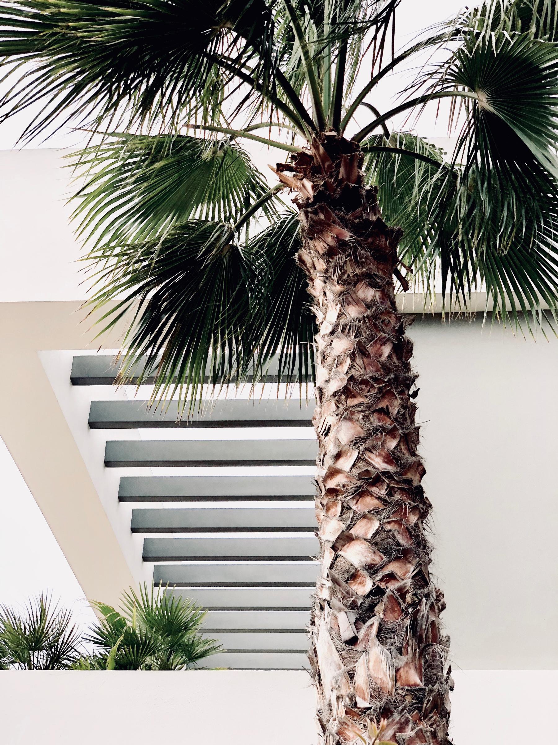palm_tree_pruning_tips.jpg