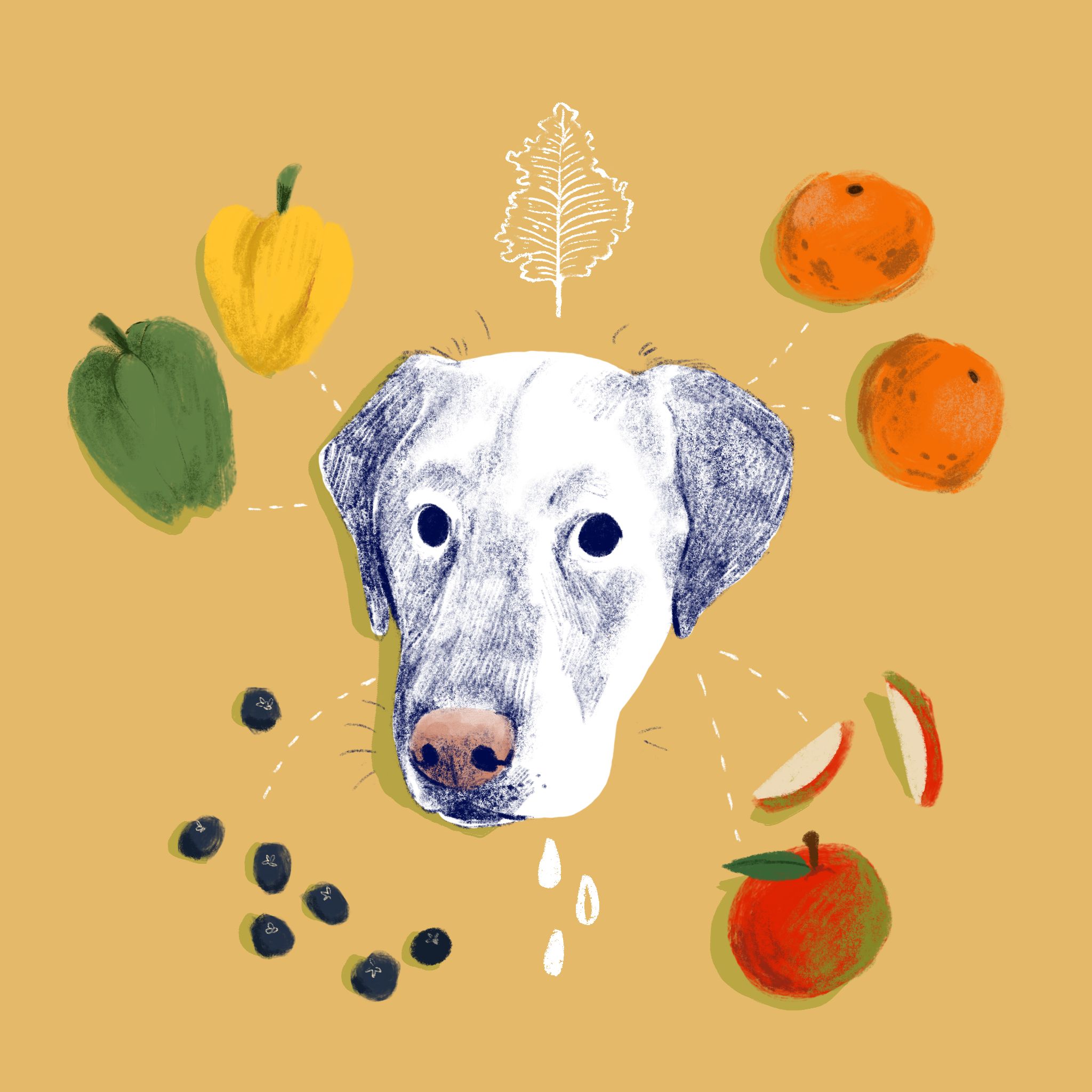 Blue Loves Produce // Digital Illustration, 2019