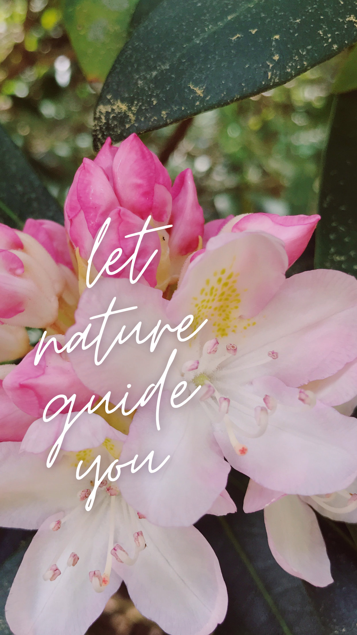 nature-guide-rhododendron-wallpaper
