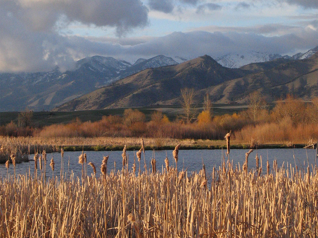 Owners Tim and Kathy Crawford of Pheasant Farms opened their restored wetlands for daily tours.
