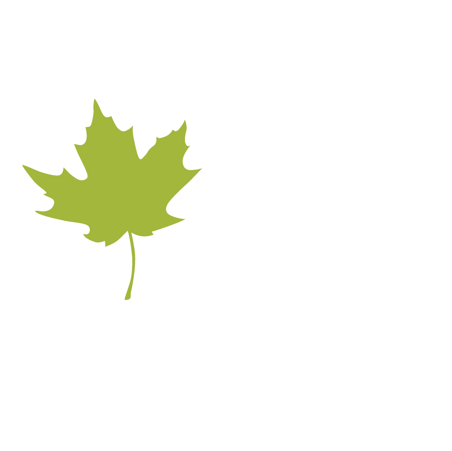 Maple Leaf Leaves 1.png