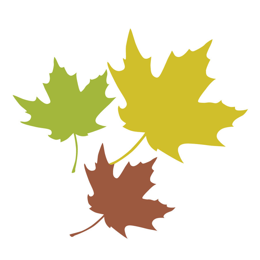 Maple Leaf Leaves 3.png