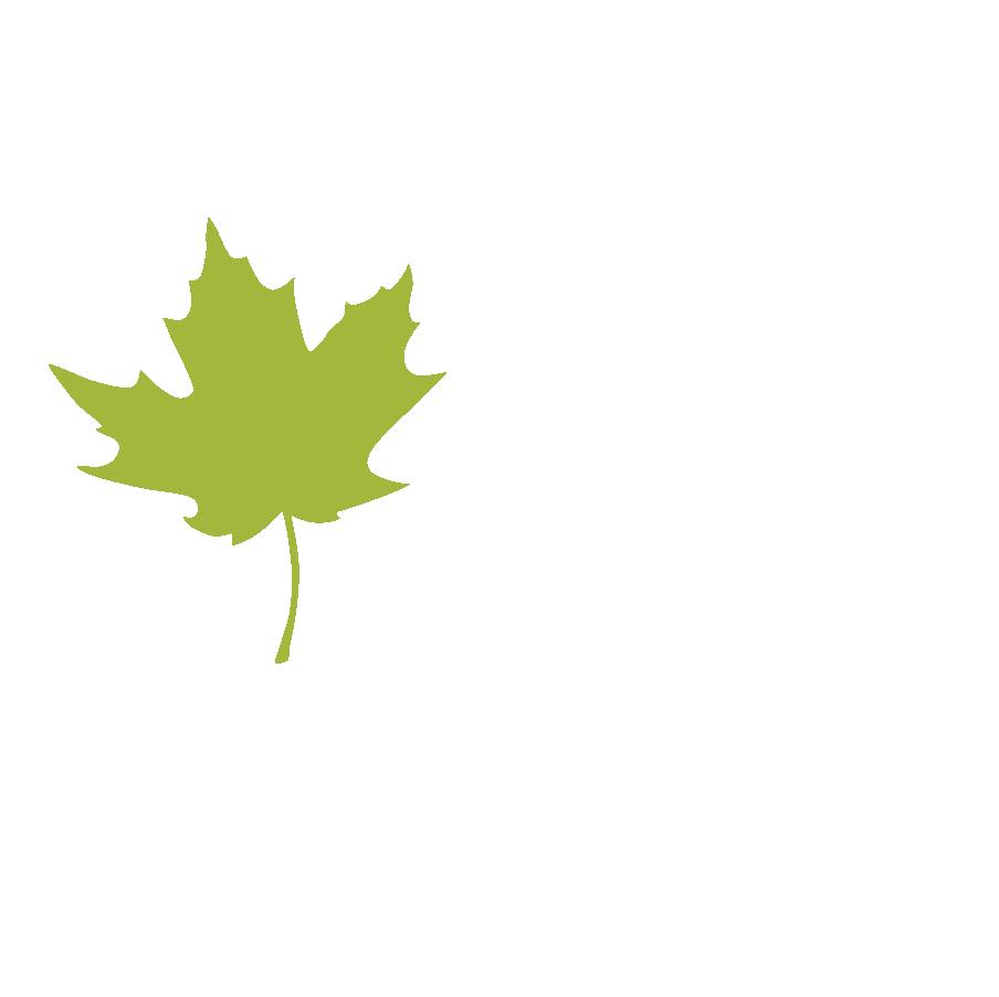 Maple Leaf Leaves 1.png