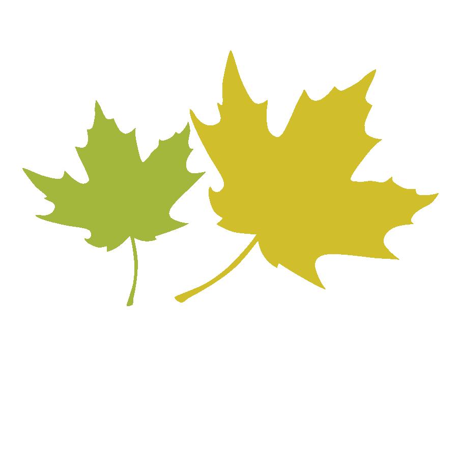 Maple Leaf Leaves 2.png