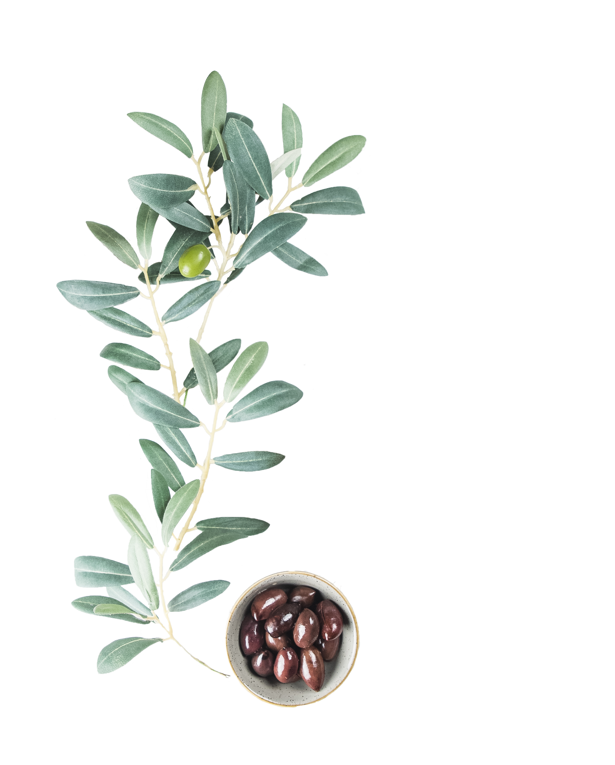 cutout olives 1.png