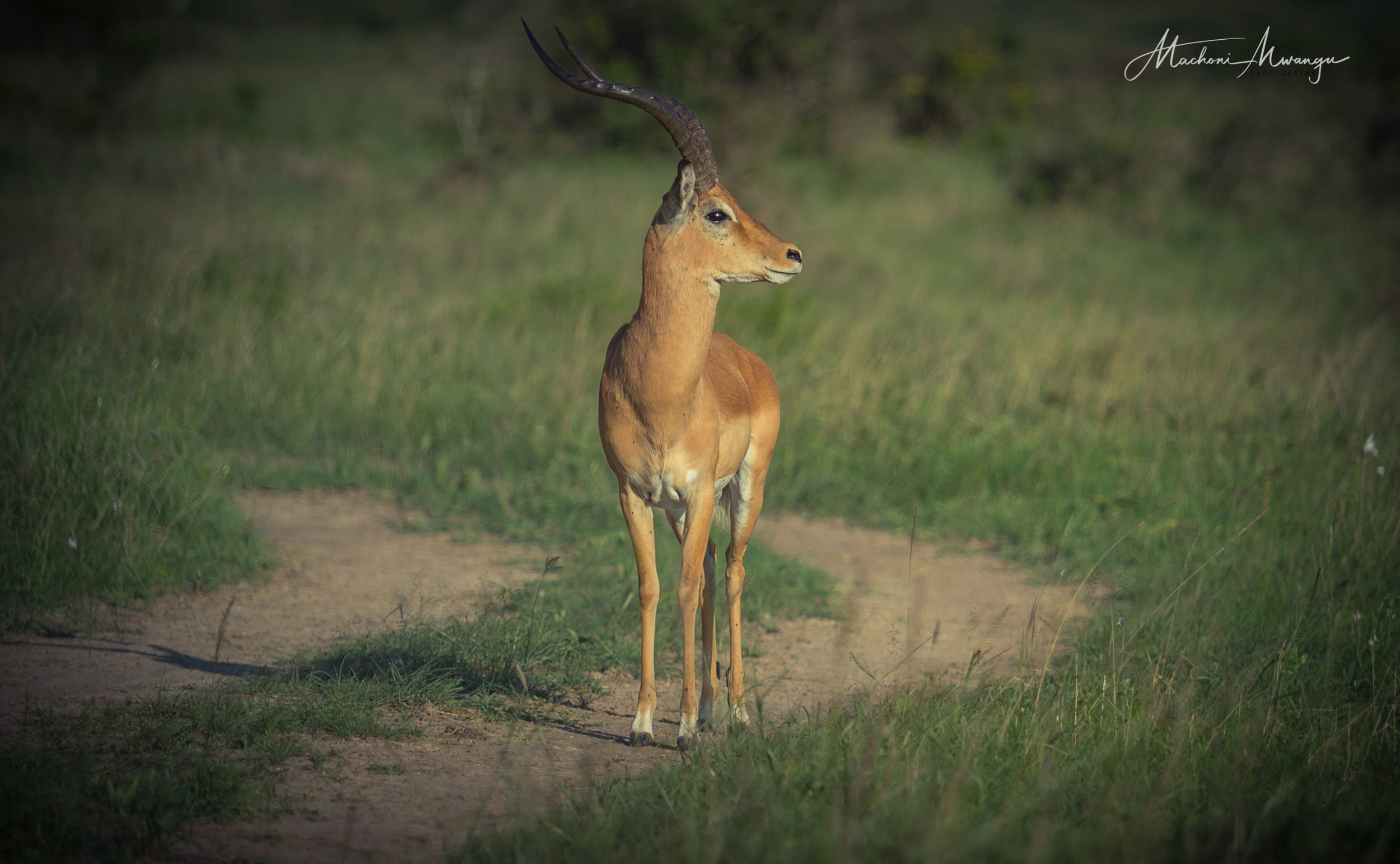 Thomson Gazelle-1.jpg