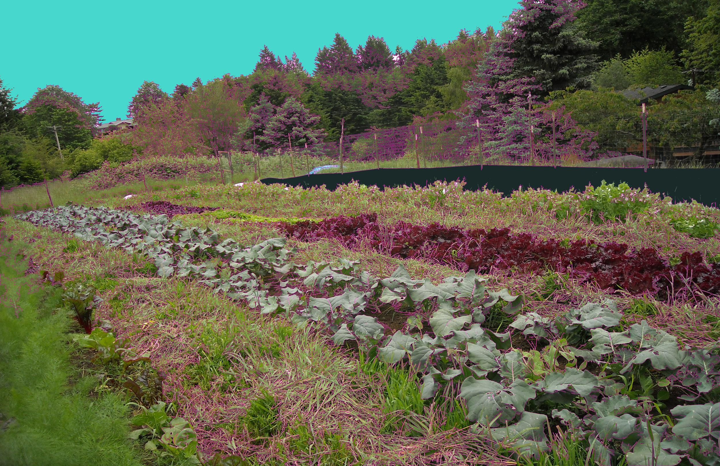 Colorafied field.jpg