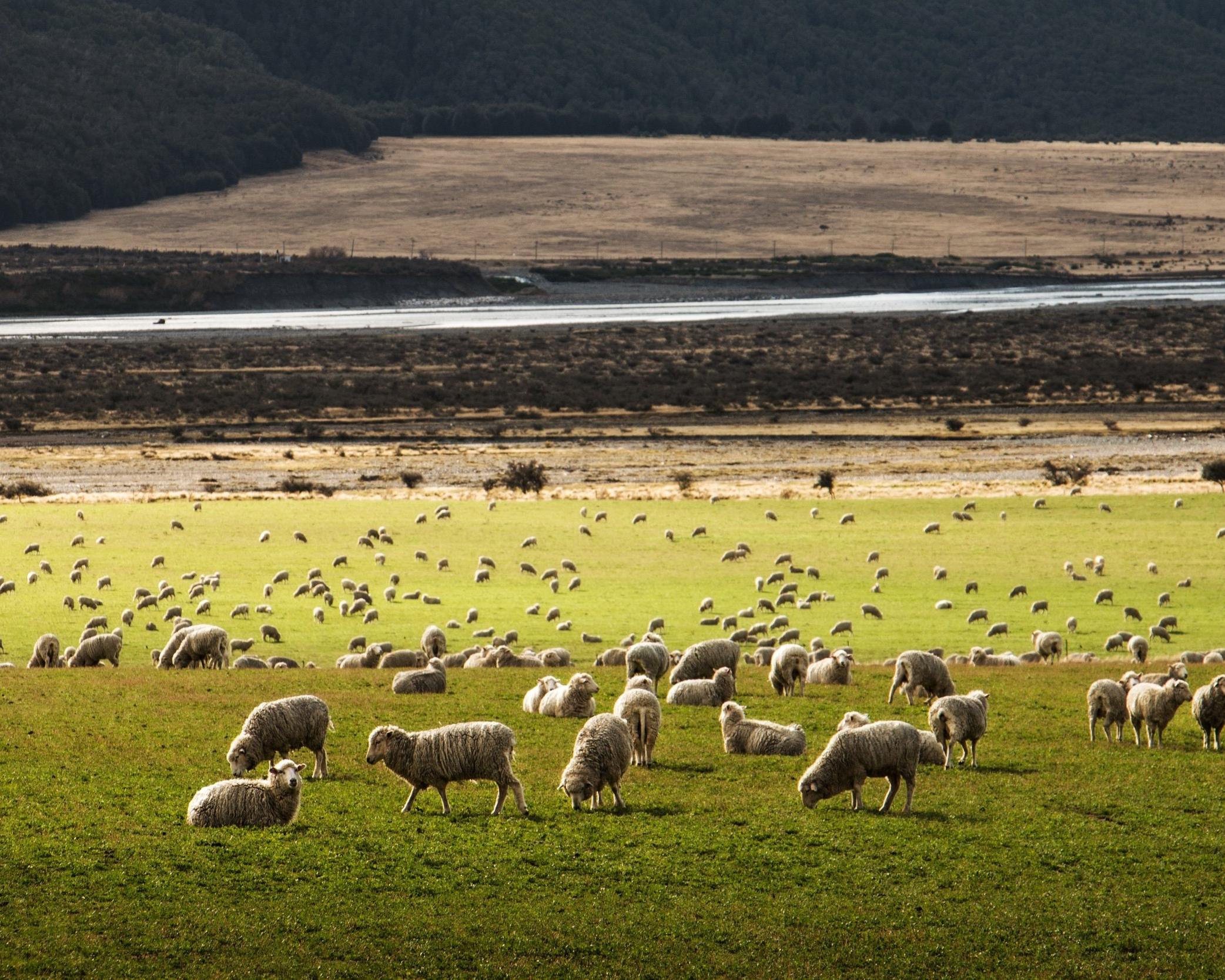 Taziki's Family Farms
