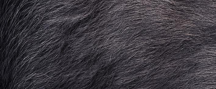 Mid Grey • COWHIDE